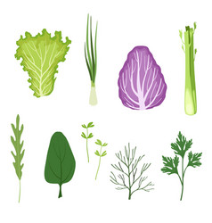 salad greens and leaves set vegetarian healthy vector image