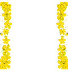 Yellow cassia fistula - golden shower flower vector
