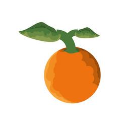isolated orange fruit vector image vector image
