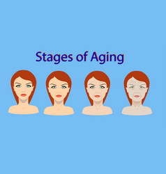 aging process four stages of face changing vector image