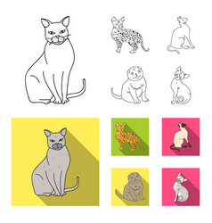 Siamese and other species cat breeds set vector