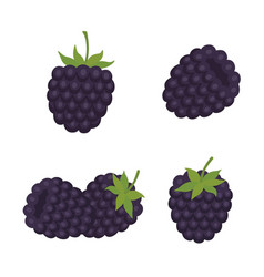 blackberry sweet fruit forest berry vector image