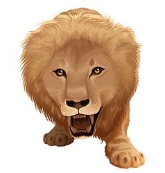 Pathera leo vector