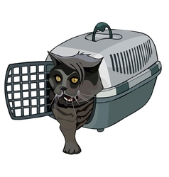 cartoon black cat coming out of the bag carrying vector image vector image