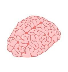 pink brain vertical view vector image vector image