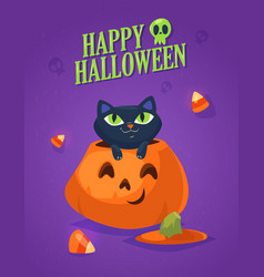 a cute black cat on a halloween pumpkin vector image