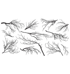 Chestnut poplar maple oak and etc branches trees vector