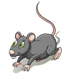 Gray rat vector
