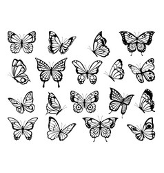Silhouettes butterflies black pictures of vector