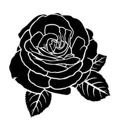 Lush roses flower vector