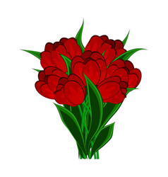 Red tulips - flowers on a white vector