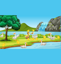 Scene with many ducks river vector