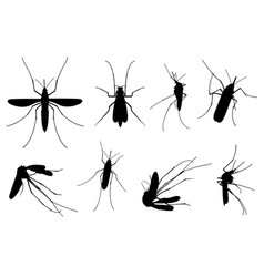 set of different mosquitoes vector image