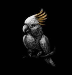 Sulphur-crested cockatoo parrot cacatua galerita vector