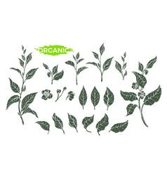 tea set sketch 3 vector image