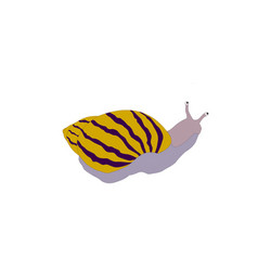 beautiful snail isolated cartoon vector image
