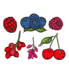 berry color set vector image