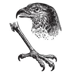 Eagle claw vintage vector