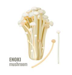 Enoki mushrooms long thin white golden needle vector
