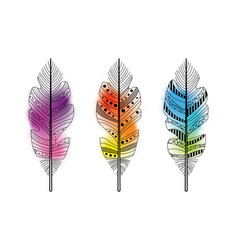 Feathers with watercolor background vector