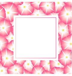 Pink morning glory flower banner card vector