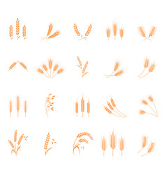 wheat set of icons vector image