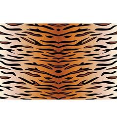 tiger skin vector image vector image