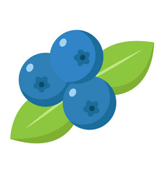 Blueberry flat icon fruit and diet vector