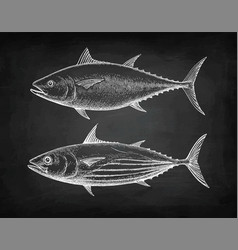 chalk sketch of tuna vector image