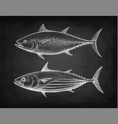 Chalk sketch tuna vector