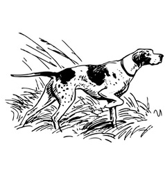 Pointing breed vector
