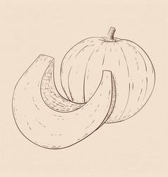 pumpkin hand drawn sketch on beige background vector image