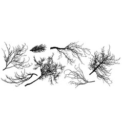 Set silhouette branch trees fir tree vector