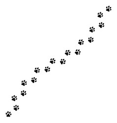 trail dog or cat tracks vector image