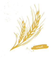 Wheat barley grain symbol vector