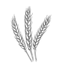 wheat bread ears cereal vector image vector image