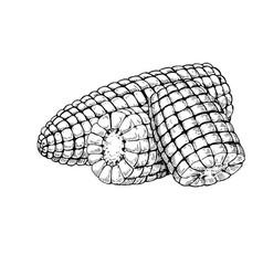 corn cob hand drawn isolated vector image