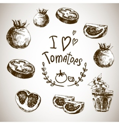 hand drawn sketch vegetables tomatoes vector image