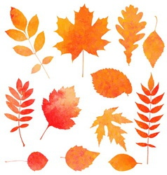 Watercolor collection of beautiful orange autumn vector image vector image