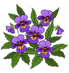Flowers pansies viola vector