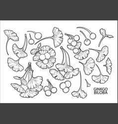 graphic ginkgo biloba branches vector image