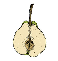 hand drawn vintage of isolated pear on white vector image