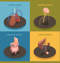 human organs isometric concept vector image
