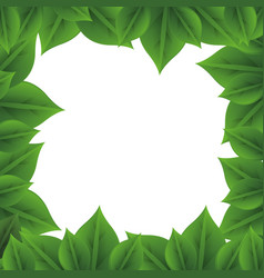 Leaves nature frame vector