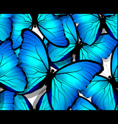 Seamless butterfly pattern wings on white vector