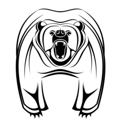 wild bear vector image