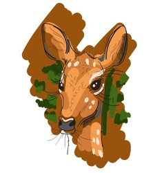 Hand drawn of Deer in sketch style vector image