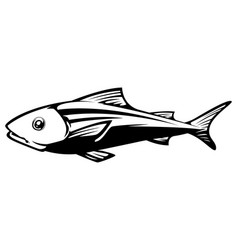 fish on white vector image