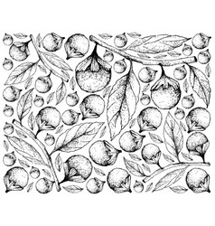 Hand drawn background of cordia caffra fruits vector