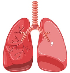 Human lungs with tuberculosis vector image